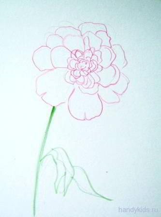 pfingstrose zeichnen blumen zeichnung, zeichne eine pfingstrose. pfingstrosen zeichnen lernen, Design ideen